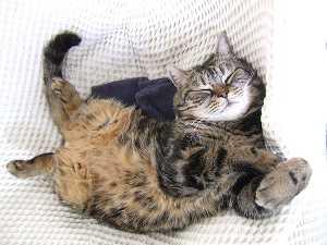 Fall asleep like a warm cat